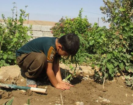 Reforestation in Iraqi Kurdistan